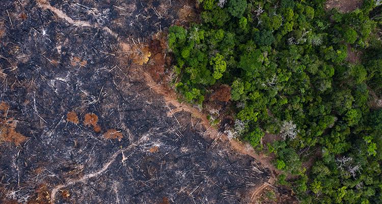 Halva bilden visar svart mark, andra halvan visar grön skog