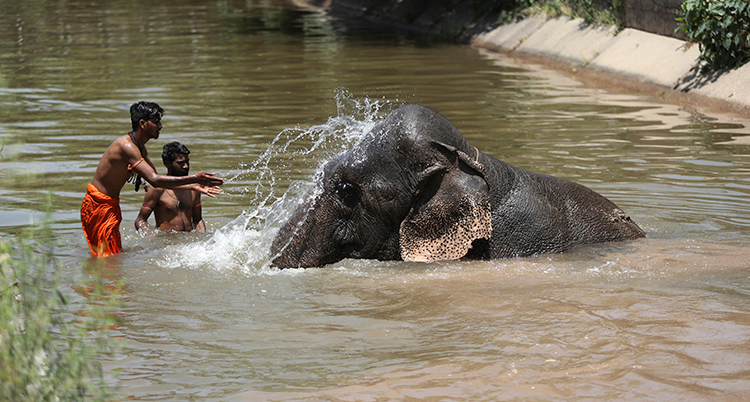 två personer badar med en elefant i en flod.
