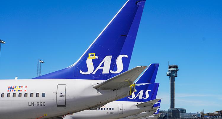 Flera flygplan står parkerade på rad. Det står SAS på dem.