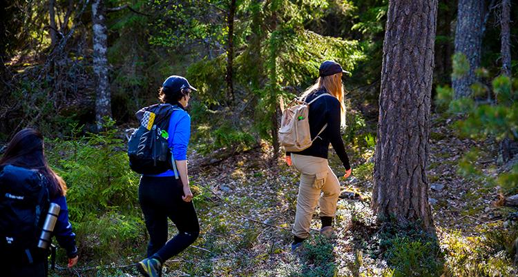 Tre personer går i en skog. De har ryggsäckar.
