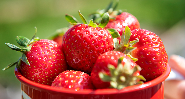 röda jordgubbar i en röd skål.