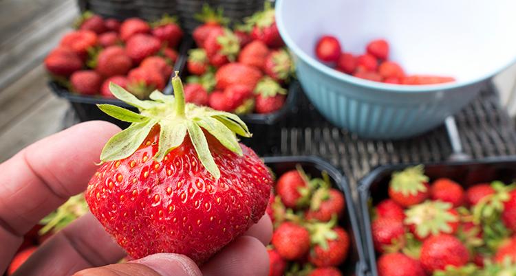 En hand visar fram en jordgubbe. I bakgrunden flera skålar med bär.