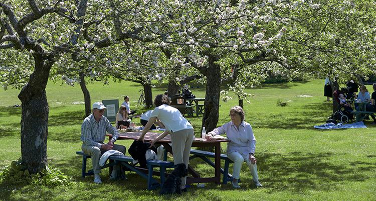 Några sitter och fikar vid ett bord i en park.