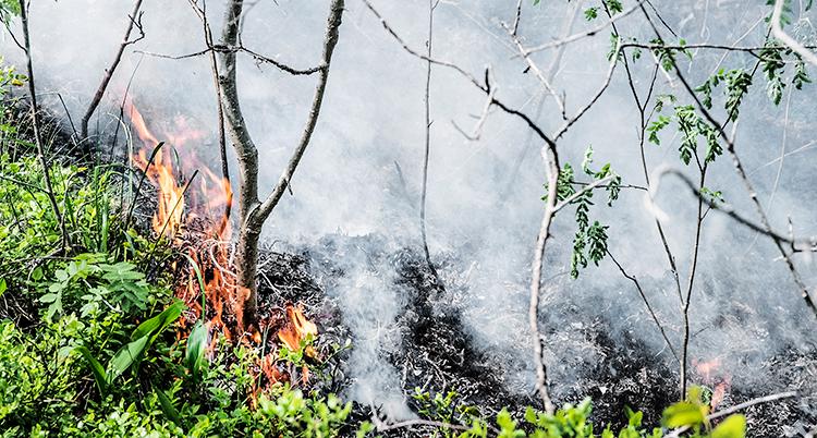 Det brinner i en skog. Man ser eld och mycket rök.