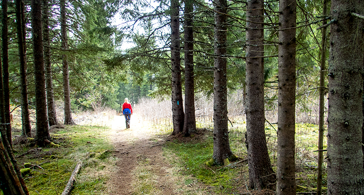 en person går ensam i skogen.