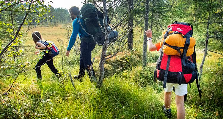en familj på vandring på ett fält nära en skog.