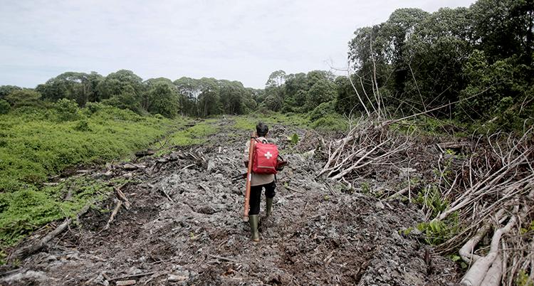 Bilden visar nedhuggen skog i Indonesien.
