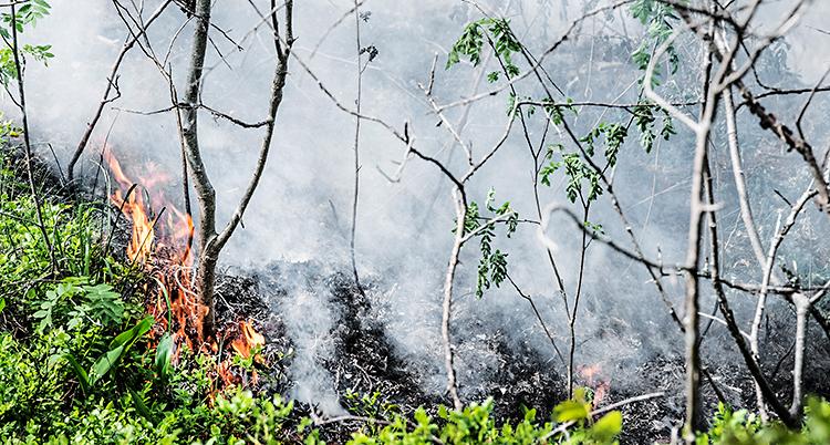 Vi ser buskar och några små träd. Det brinner på marken och i buskarna.
