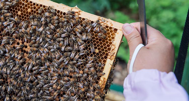en hand håller en ram med ett nät som är full av bin.