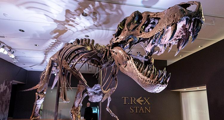 Ett stort skelett som är byggt så att det ser ut som en dinosaurie med en stor öppen käft med stora tänder.