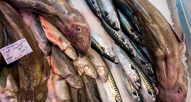 Olika sorters döda fiskar ligger på is i en fiskdisk. Bland annat torsk syns.