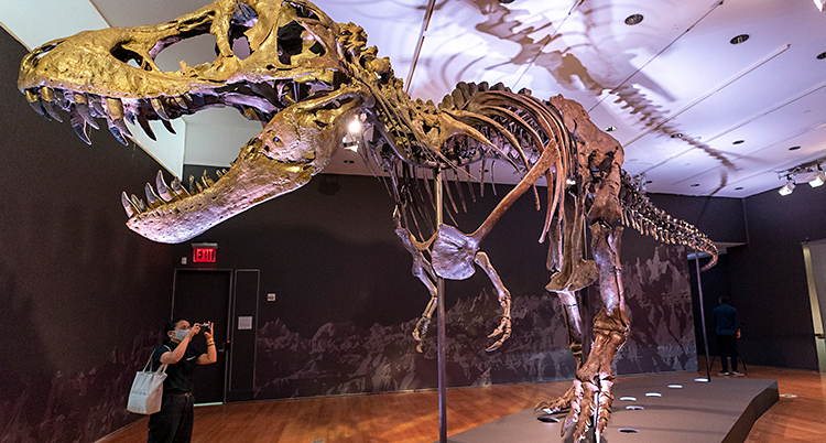 Skelettet står i ett rum. En person tar kort på skelettet.