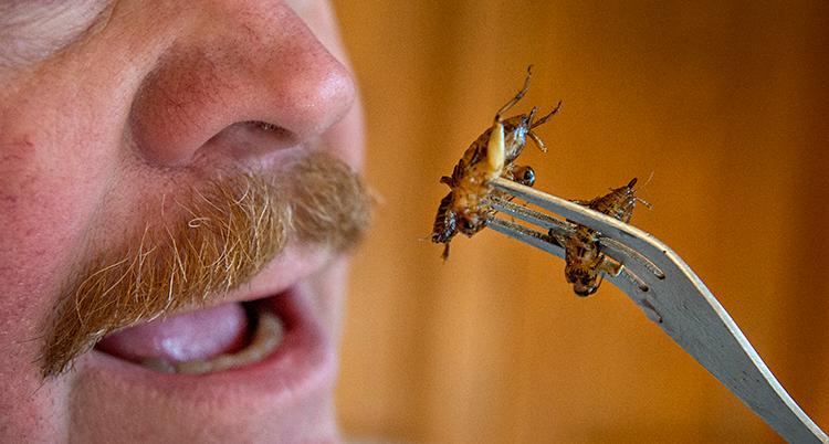 En närbild på ansiktet av en man. Han har mustasch. Han öppnar munnen. På en gaffel framför munnen sitter två stekta insekter.