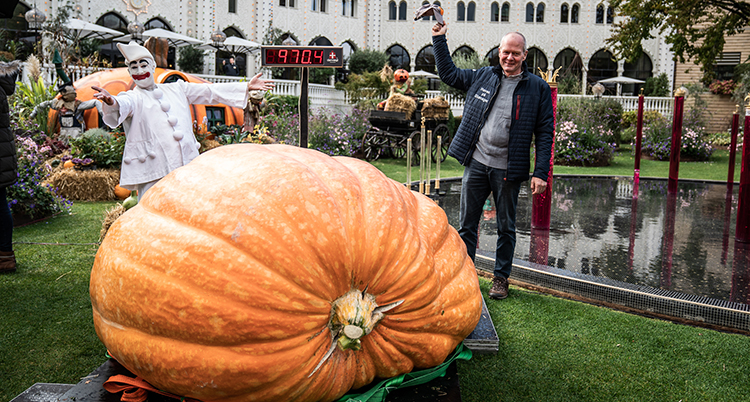 En gigantisk orange pumpa ligger på en gräsmatta. En clown och en man står bakom pumpan.