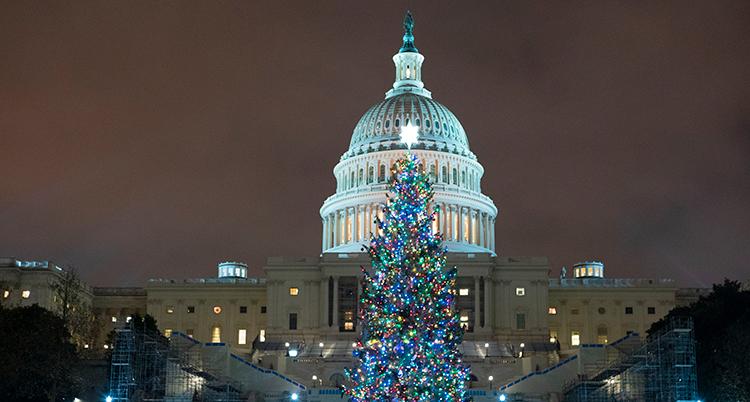 En bild på en stor byggnad. Det är kväll. En julgran lyser framför byggnaden.