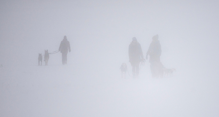Det är alldeles vitt. Det snöar. Några människor är ute och går med sina hundar. De ser ut som skuggor.