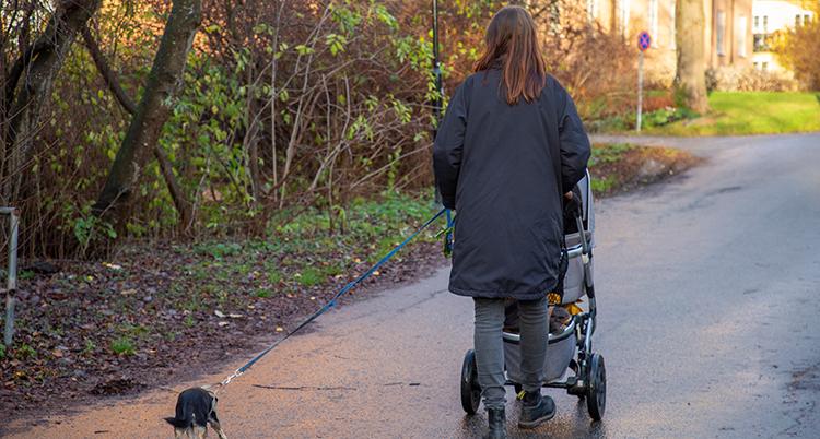 Hon har en mörk jacka och går med en barnvagn och har en hund i koppel intill. Hon har ryggen mot kameran.