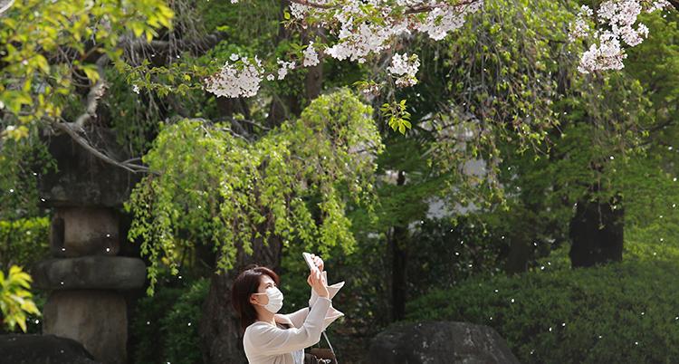 En kvinna med munskydd fotar ett träd som blommar.