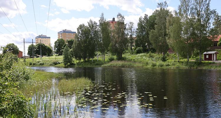 i förgrunden ses en vattenspegel med vass och i horisonten ses ett par höga hus och träd.