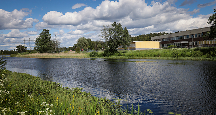 Bilden visar en å i Hagfors. Det växer gräs och träd vid ån. På andra sidan vattnet syns hus.