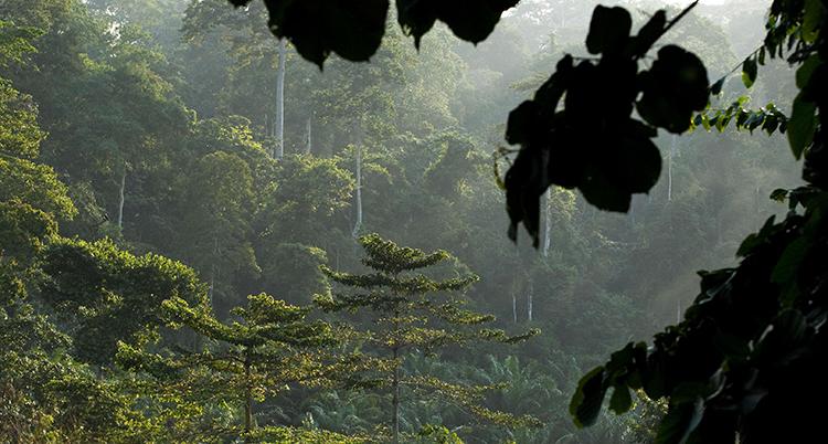 Löv och grenar syns i förgrunden. Länge bort syns frodig grön regnskog och fuktig luft.