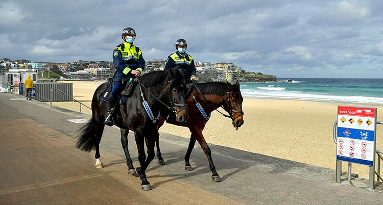 Två poliser med munskydd rider på två hästar.