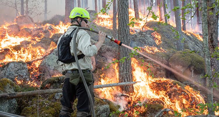 En man med en brandslang står framför en brinnande skog.
