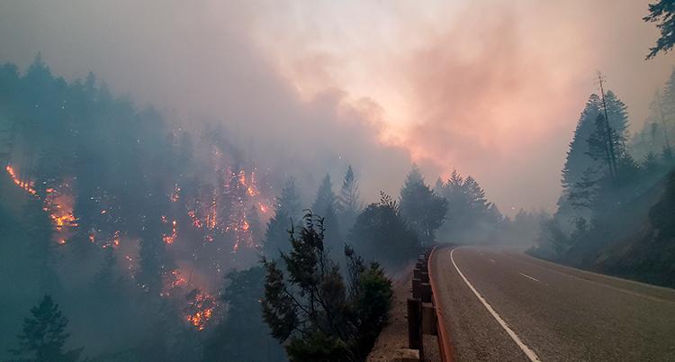 ett stort skogsparti brinner bredvid en landsväg.