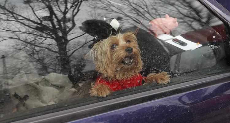 en hund tittar ut genom ett bilfönster.