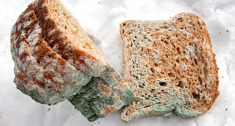 Bild på mögligt bröd.
