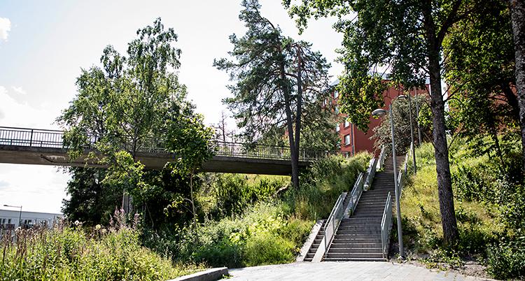 En bild som är tagen utomhus. En trappa går uppför en backe. På backen växer träd och gräs. Bredvid backen finns en gångbro ovanför marken.