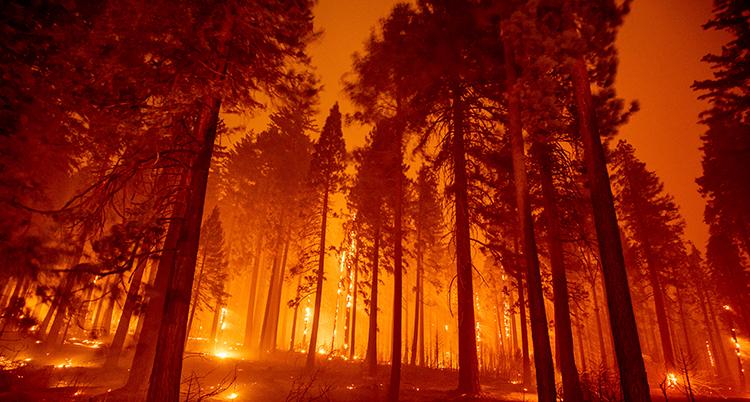 Bilden på stor brand i skogen i delstaten Kalifornien.