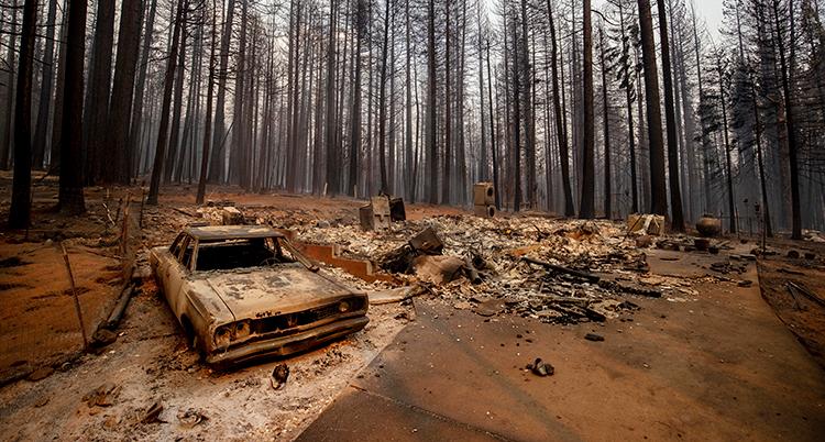 Ett områden som brunnit. svarta träd och förstörda bilar syns.