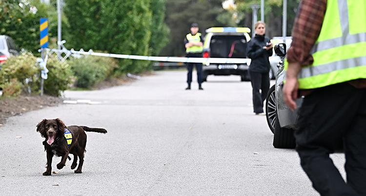 En hund springer runt på en gata. Bredvid står poliser och polisbilar.