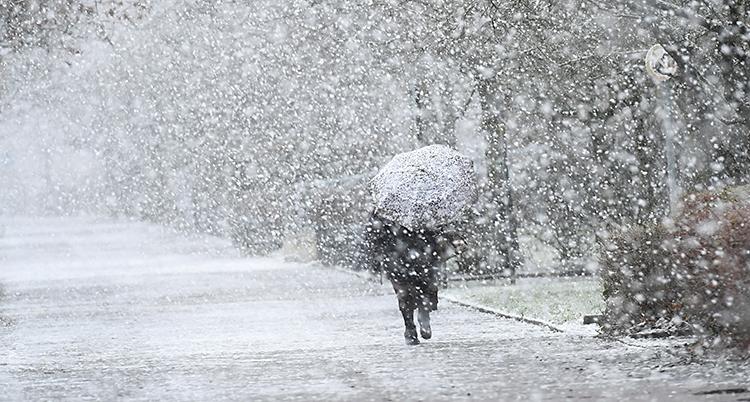 Det snöar. En person går med ett paraply för att skydda sig mot snön.
