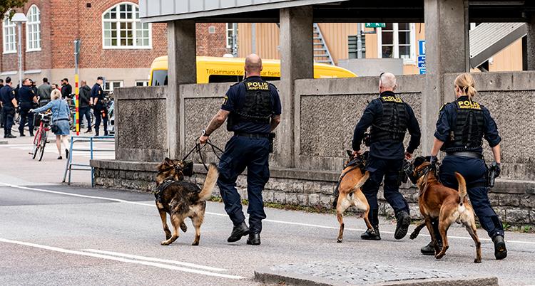 Tre poliser med hundar på väg bort mot en grupp människor som står ganska långt borta.
