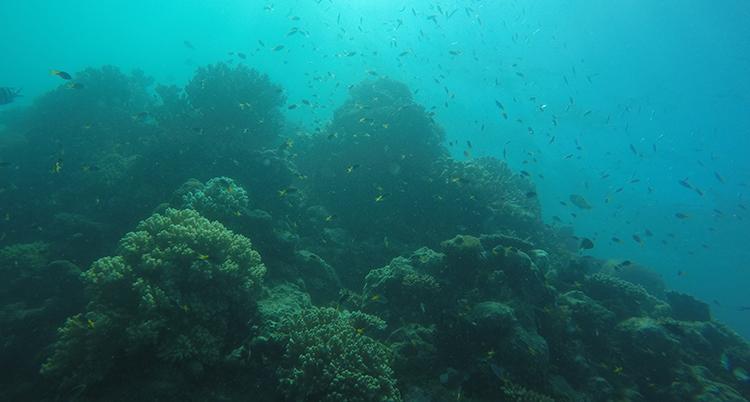 Korallrev.