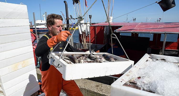 En man håller i en låda med torsk på en båt.