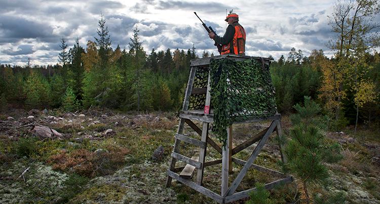 Jägaren har varselväst och står med ett gevär i ett jakttorn på en bergknalle i skogen